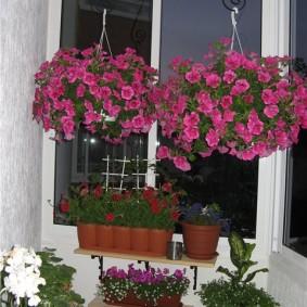 Подвесные кашпо с балконными растениями