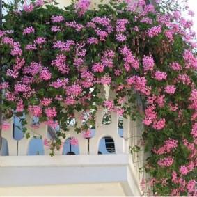 Розовые цветы с длинными ветками
