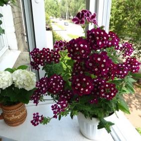Комнатные цветы на подоконнике балкона с остеклением