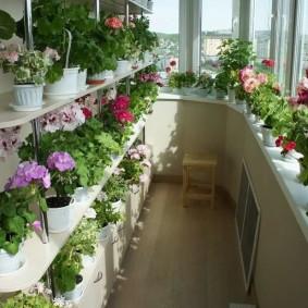 Теплый балкон с большим количеством цветов