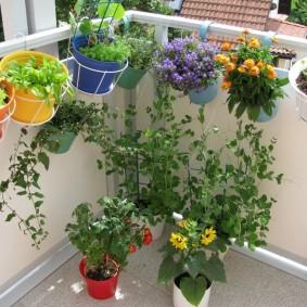 Комнатные цветы на балконе в летнее время