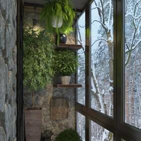 Живые растение в зимнее время на балконе