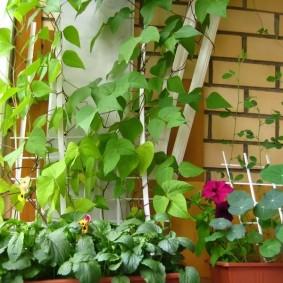 Вертикальное озеленение балкона в кирпичном доме