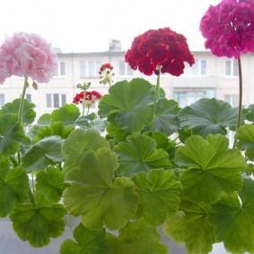 Фото красивых цветов на фоне балконного окна