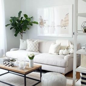 Зеленое растение в интерьере белой комнаты