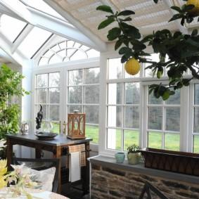Лимонное дерево в домашней оранжерее