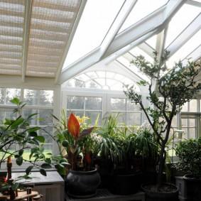 Тропические растения в зимнем саду на южной стороне дома