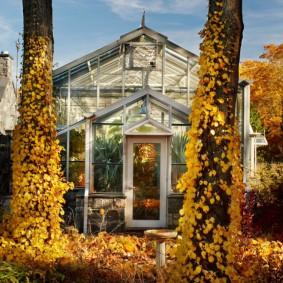 Домашняя оранжерея в осенний период