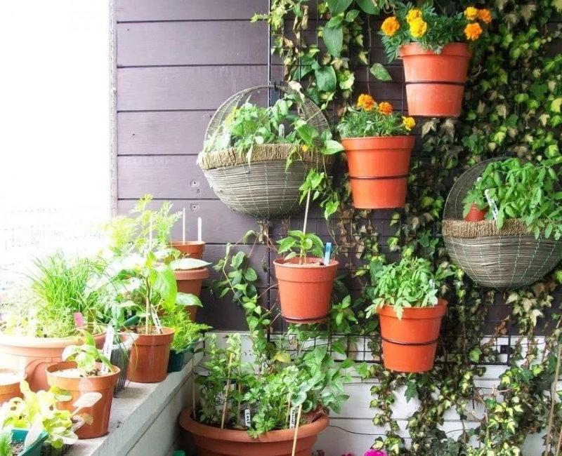 Подвесные горшки с балконными цветами