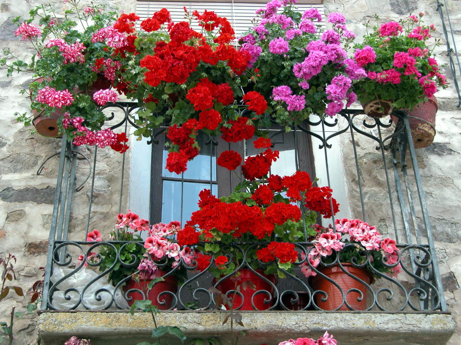Декор цветами французского балкона