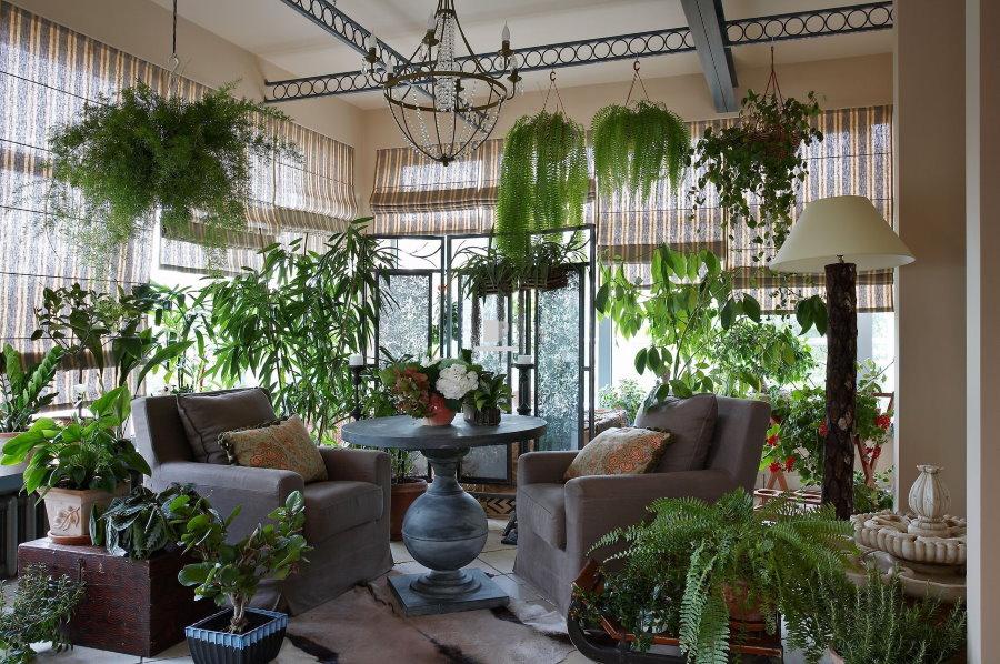 Зеленые растения в подвесных горшках под потолком террасы