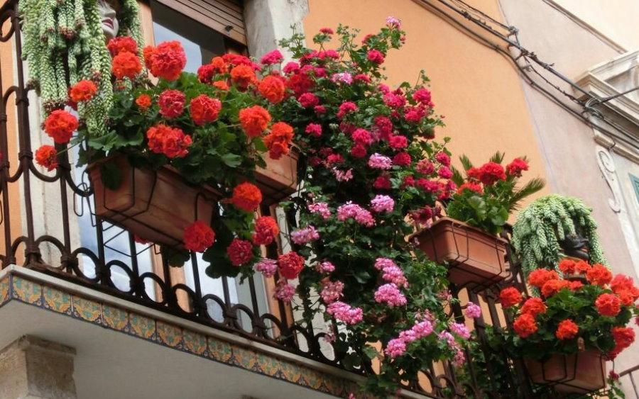 Красивые цветы на металлических перилах балкона