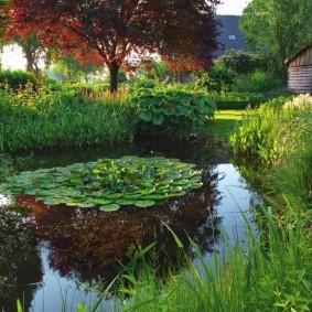 Кувшинки в садовом пруду естественного стиля