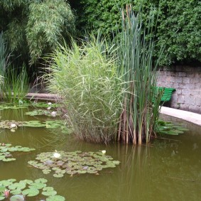 Болотные растения в дачном пруду
