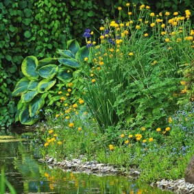 Аир болотный на берегу водоема