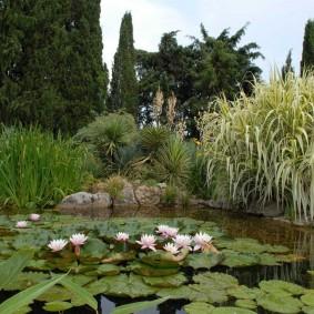 Заросший пруд с красивыми кувшинками
