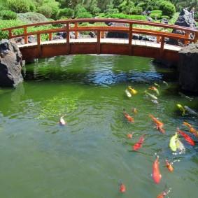 Деревянный мост через водоем с рыбками