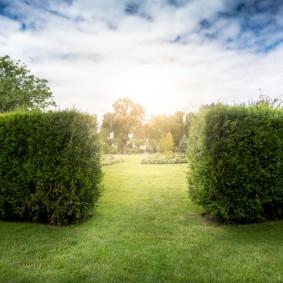 Фото живой изгороди на фоне заката