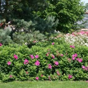 Дикая изгородь из нескольких растений