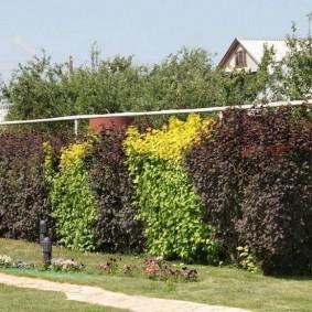 Микс из декоративных растений с разными листьями