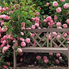 Деревянная лавочка перед кустами роз