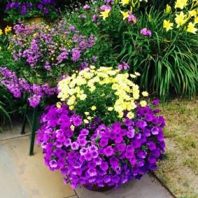 Однолетние цветы в глиняном вазоне