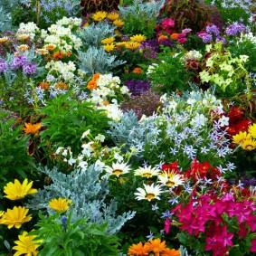 Цветочный микс из однолетних растений