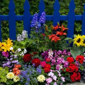 Клумба из однолетних цветов вдоль синего заборчика