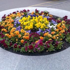 Круглая клумба с неприхотливыми цветами