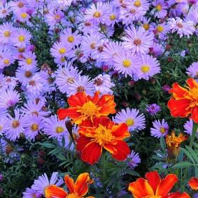 Яркая комбинация на цветочной клумбе