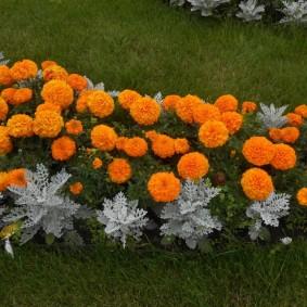 Цветочный бордюр из оранжевых бархатцев