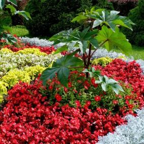 Цветы различной окраски на одной клумбе