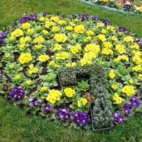 Садовая клумба с цифрой 7 из цветов