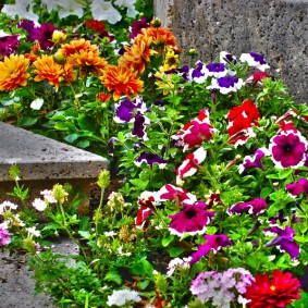 Обильно цветущие растения на дачной клумбе