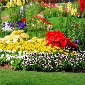 Трехцветная клумба с летними цветами