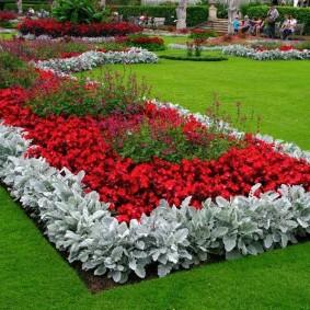 Красные цветы на клумбе прямоугольной формы