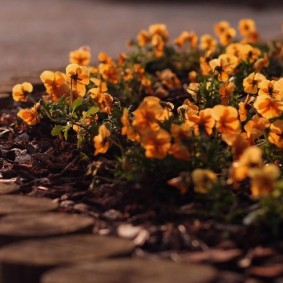 Деревянные бордюр на клумбе с яркими цветами
