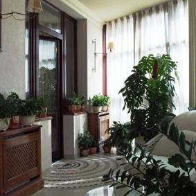 Домашняя оранжерея на большой лоджии