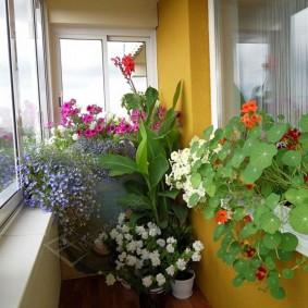 Комнатные цветы в дизайне небольшого балкона