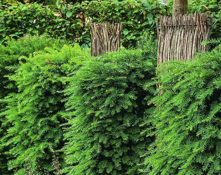 Декоративная изгородь из кустарников и ивовых веток