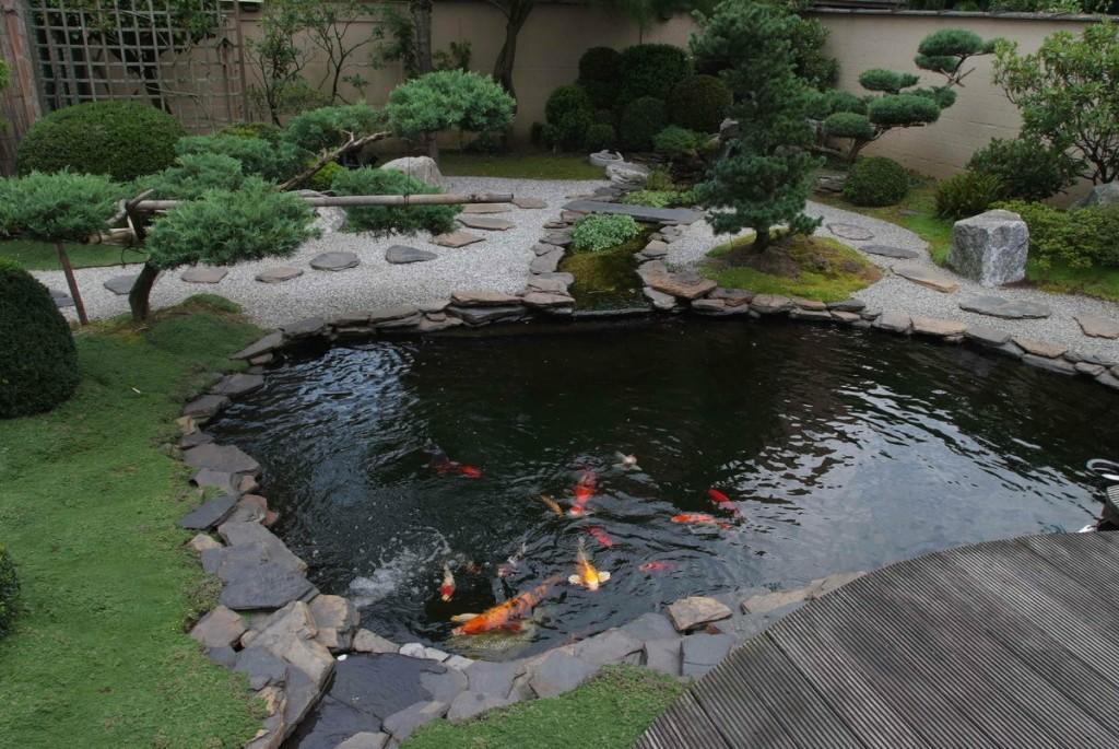 Красные рыбки в искусственном водоеме