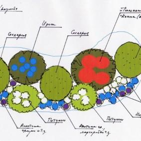 Схема цветочного бордюра из однолетников