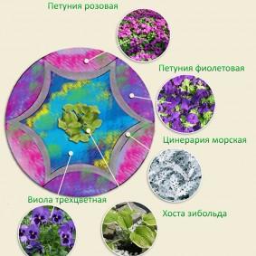 Схема цветочной клумбы с виолой трехцветной