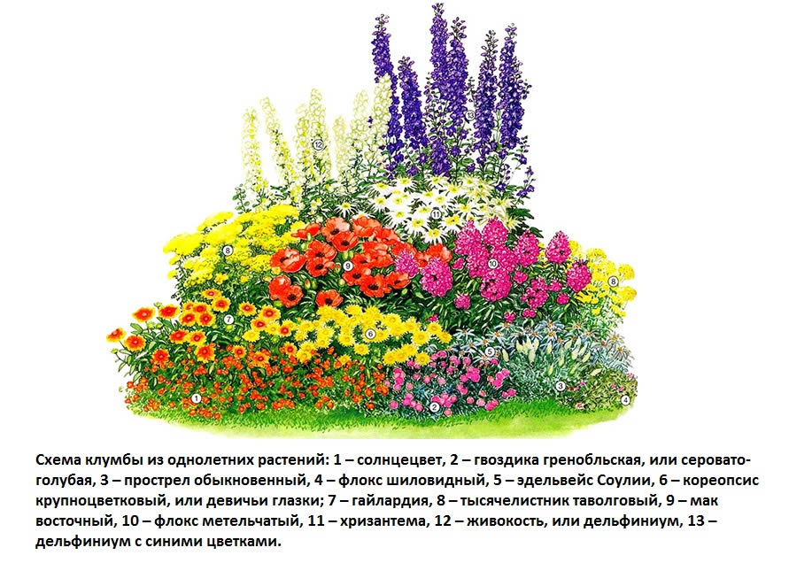 Рисунок клумбы из однолетних цветов